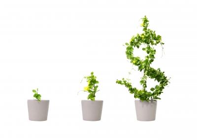 growing-money-tree